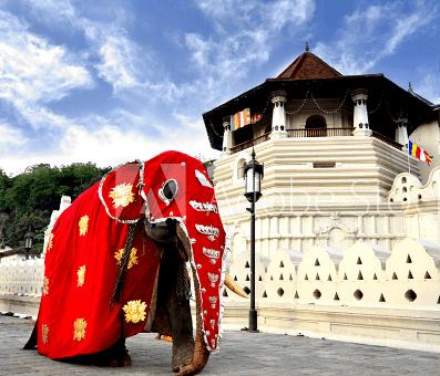 Sri Lankan Festivals and Celebrations