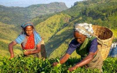 Visit Sri Lanka's Tea Plantations