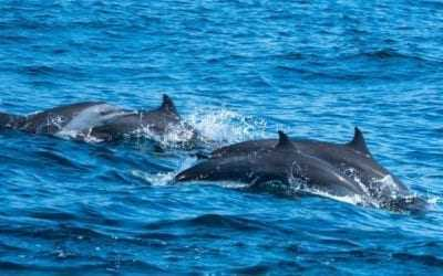 Dolphin watching like nowhere else in the world