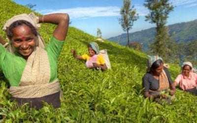 Celebrating 150 years of Sri Lankan tea!