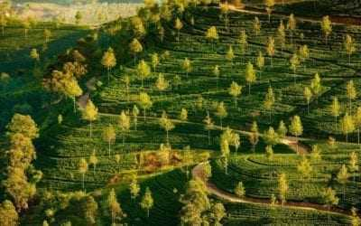 Amazing holiday photos of Sri Lanka's Hill Country