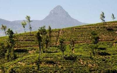 Adam's Peak Pilgrimage Climb in Sri Lanka