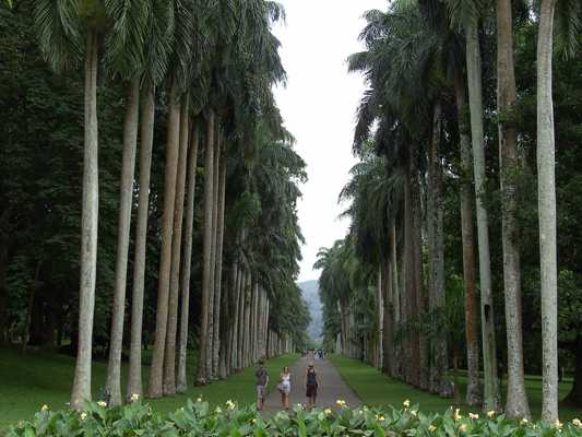 Day trip to the Royal Botanic Gardens in Kandy