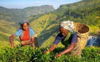 Visiting the tea plantations of Sri Lanka
