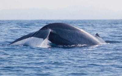 Sri Lanka's whalewatching season starts in November
