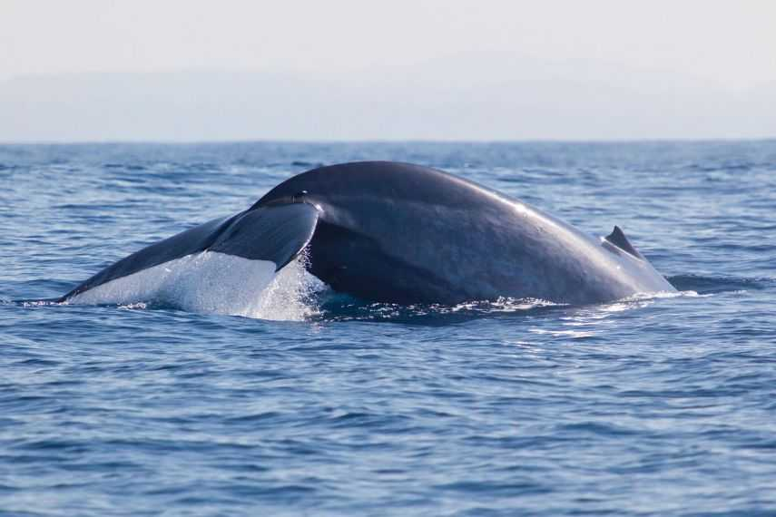Sri Lanka's whalewatching season starts in November