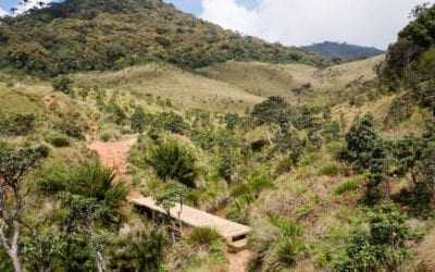Trekking the Horton Plains in Sri Lanka