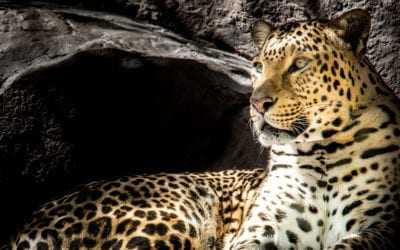 Sri Lanka's wildlife calendar